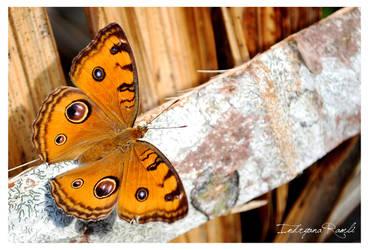 beauty-fly 1 by indryana