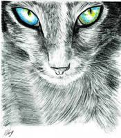 Cat by grini
