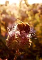 Bumblebee 2 by grini