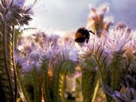 Bumblebee 3 by grini