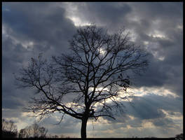 Lonely Scary Tree by grini