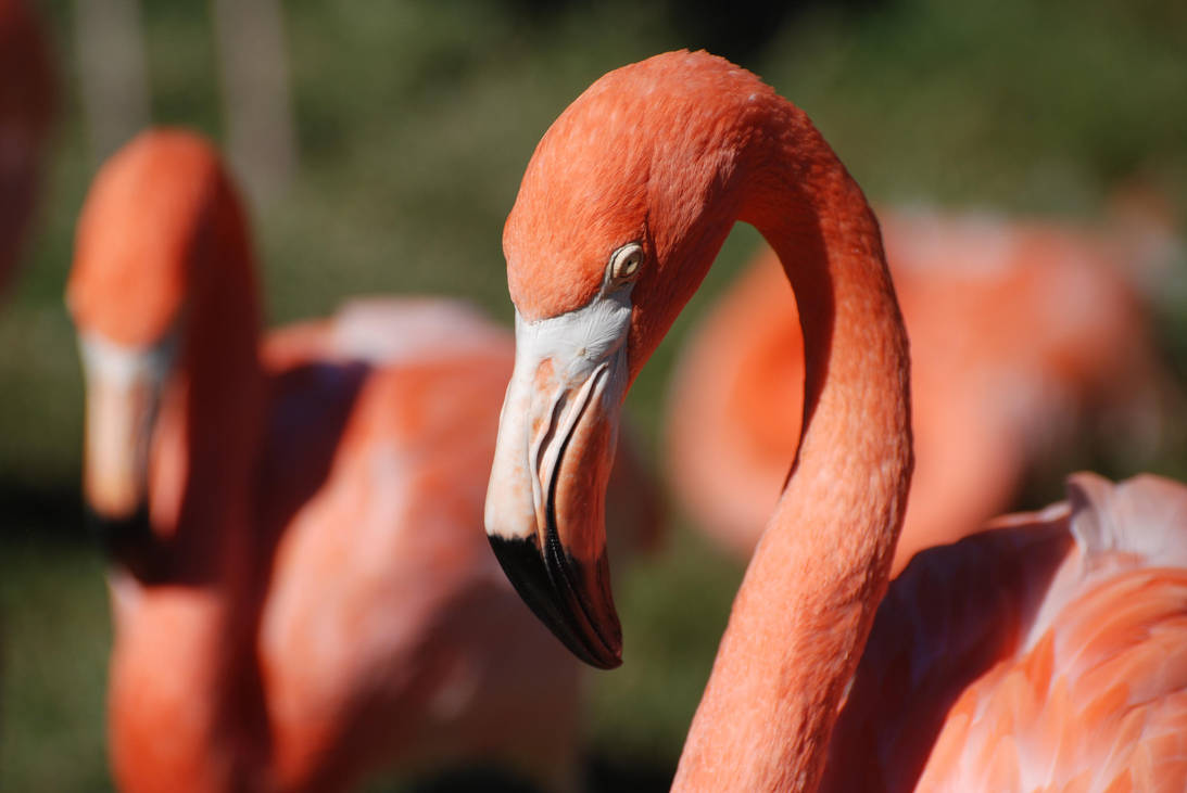 Pink Flamingos by GamerZzon