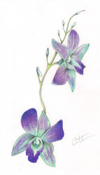 Blue Orchids by 5h4dow