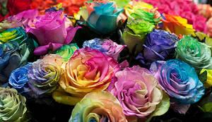 roses by galimzyanova