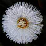 flower 144 by EphemeralMind