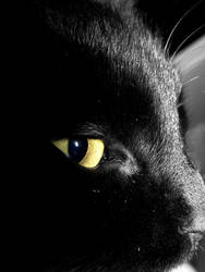 cat's eyes by minisucette