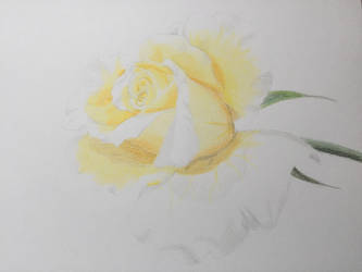 Yellow Rose by Mustang-Moon
