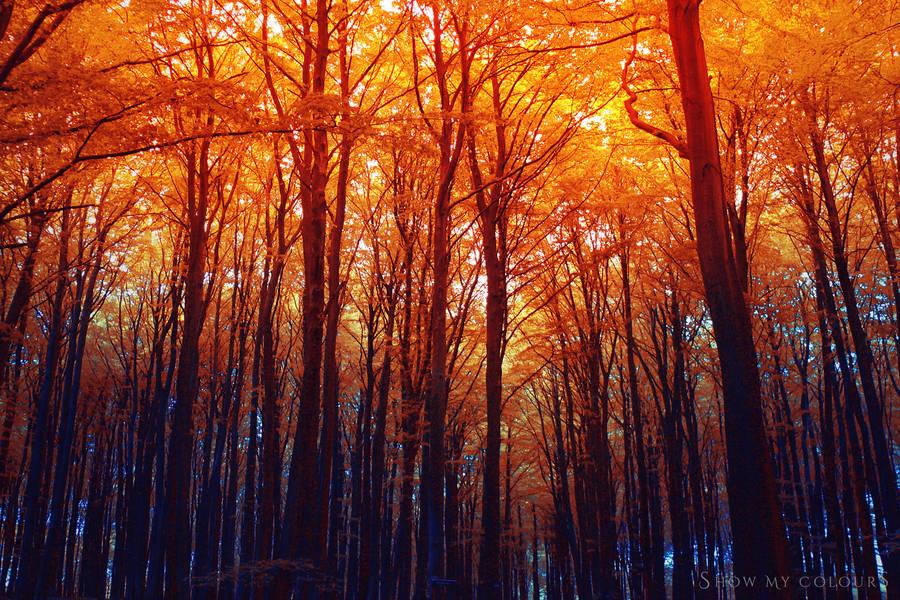 Burning Autumn by ShowMyColours