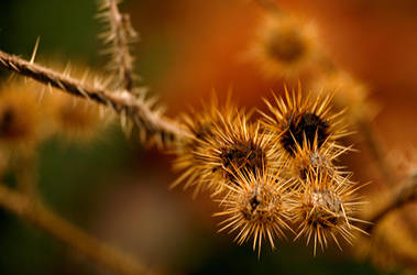Prickly Bunch by QuickStopMe