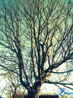 Old'Tree by Robyn-Gayfaceee