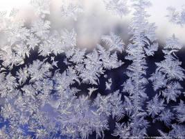 Winter Morn by aardvarko