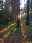 Forest - 01 by Hilde-Stock