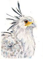 Secretary Bird by meganrenae-art
