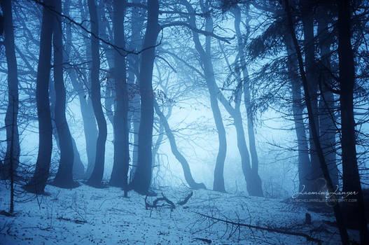Grimm's Forest by kuschelirmel