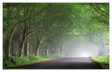 Summer Mists by Meowgli