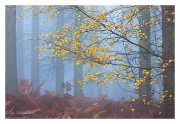 Farewell Autumn by Meowgli