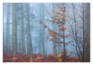Farewell Autumn II by Meowgli