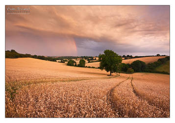 Stormy Shire by Meowgli