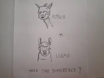 Alpaca Llama Difference by SlugSlimes