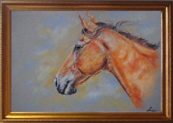 Horse portrait by EvGolverk