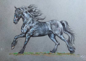 Friesian horse by EvGolverk