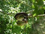 snake tree11 by Wicasa-stock