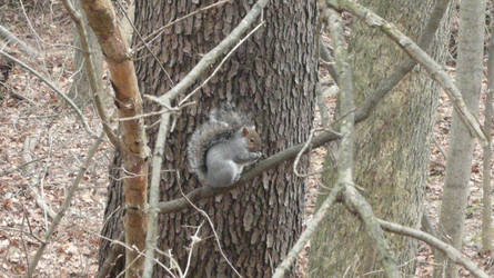 squirrel4 by Wicasa-stock