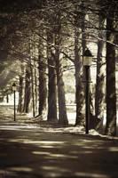 Path of Light by TheArtOfaMadMan