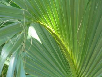 Palm by crop