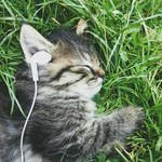 Cat and Music by Valeriya2903