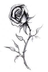 Rose by BeryllBat