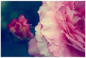 Roses by LagrimasDelCorazon