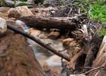 Creek by DancingCorgi