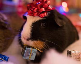 A Present for piggy by DancingCorgi
