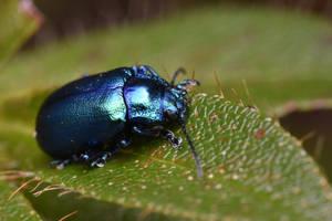 Small coleoptera by ExaVolt