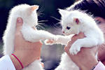 Gimme Five. by TinaApple