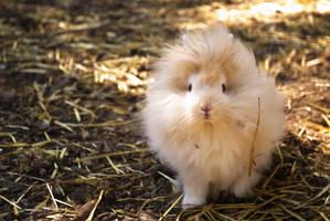 Cuty Bunny by GUIXOUS