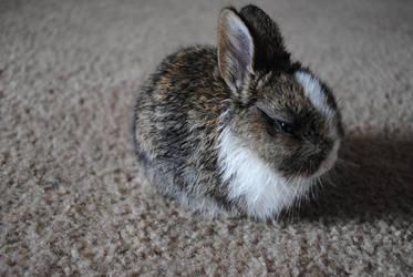 Bunny by Qinni