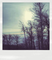 Sun.. by TPol