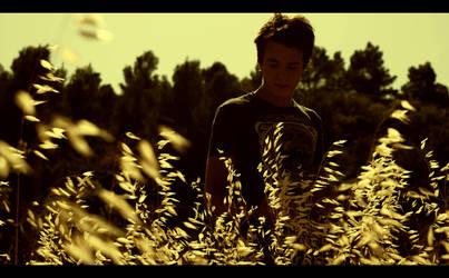 Harvest by en-vert-contre-tout