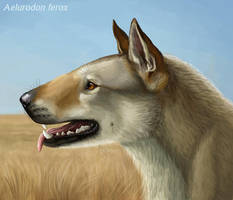 Aelurodon ferox by Viergacht