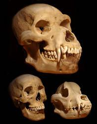 Werewolf Skull by Viergacht