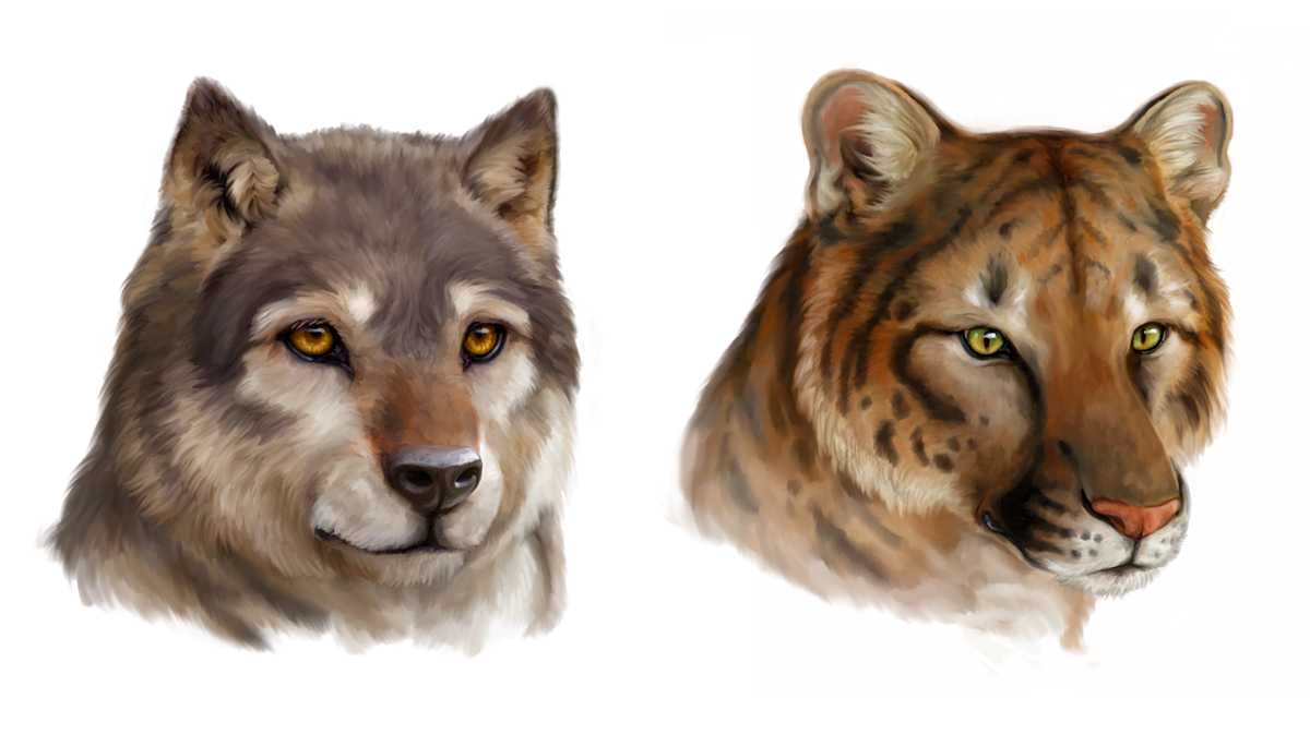 Canis concolor and Puma lupus by Viergacht