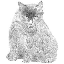 Cat scratching by Redo19
