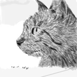 'Charcoal' Cat by Redo19