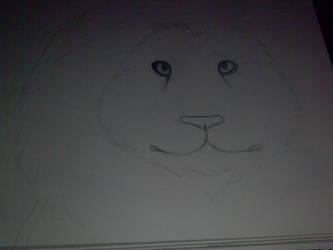 Lion by souleaterloverforeva