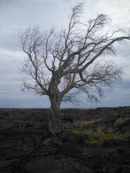 Lava Plain 17 by eliatra-stock