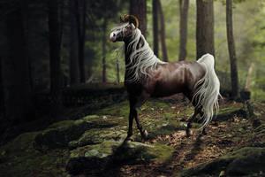 Seyare [New Char] by Twistyh-stock