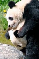 Mummy Panda and Baby Panda by Jiluo