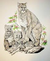 Bobcats by BeckyLiv